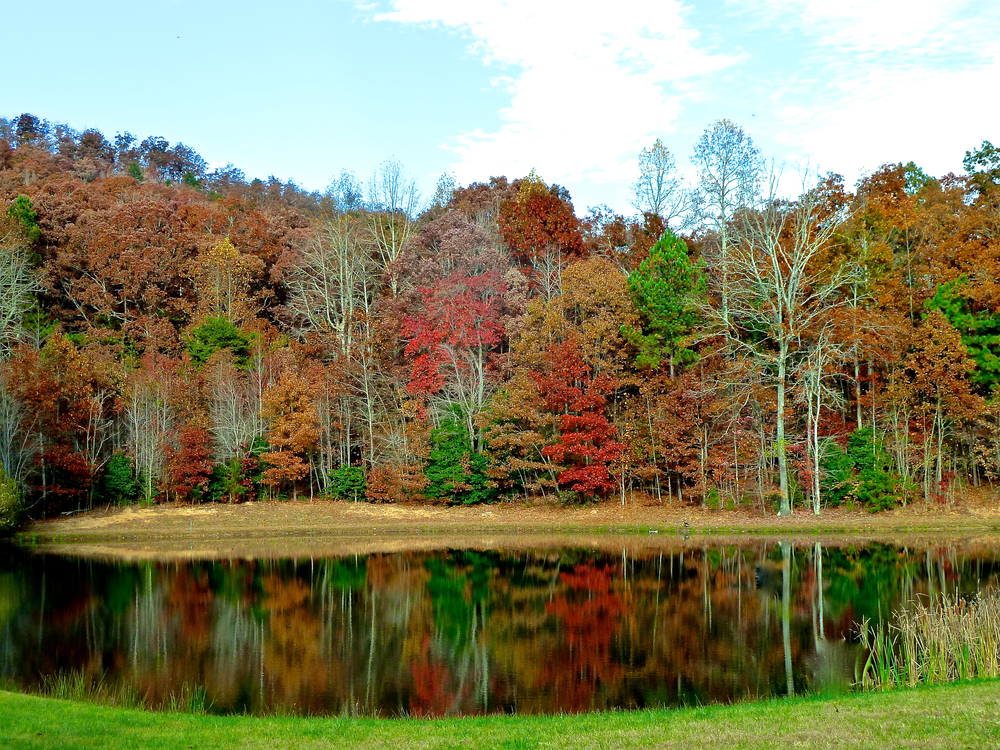 blairsville_scenery_spiritedtable_photo.1.jpg