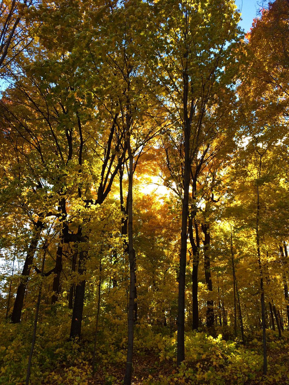 cindi_fall_forest_spiritedtable_photo1.jpg