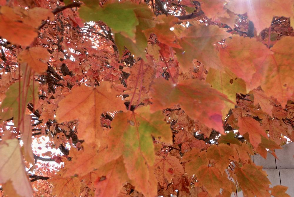 cindi_fall_leaves_blairsville_spiritedtable_photo1.jpg