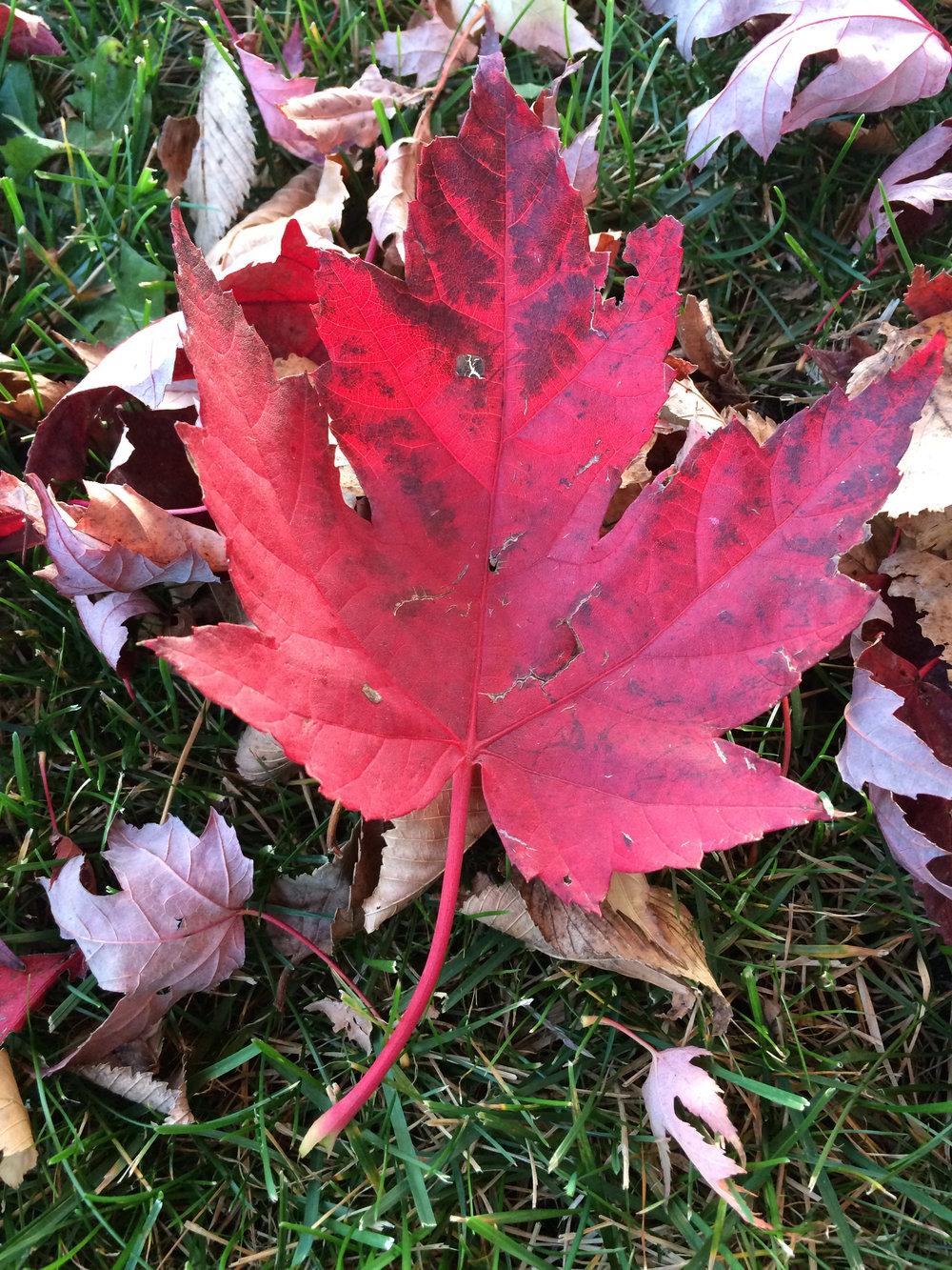 zehorit_fallflavors_pumpkin_apple_pear_spiritedtable_photo.2.jpg