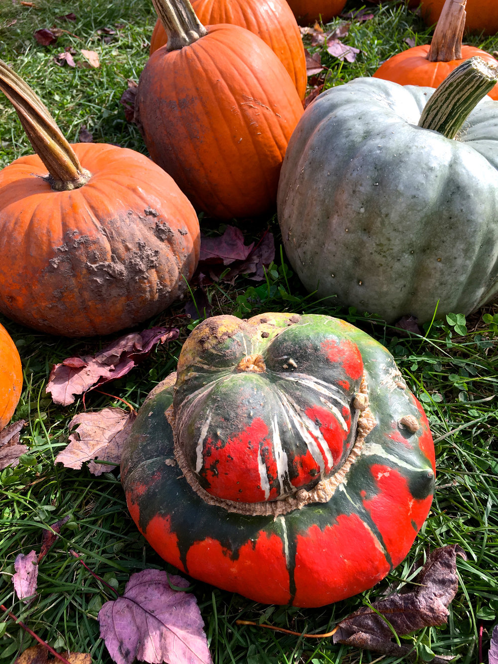 zehorit_pumpkin_carving_fall_spiritedtable_photo2.jpg