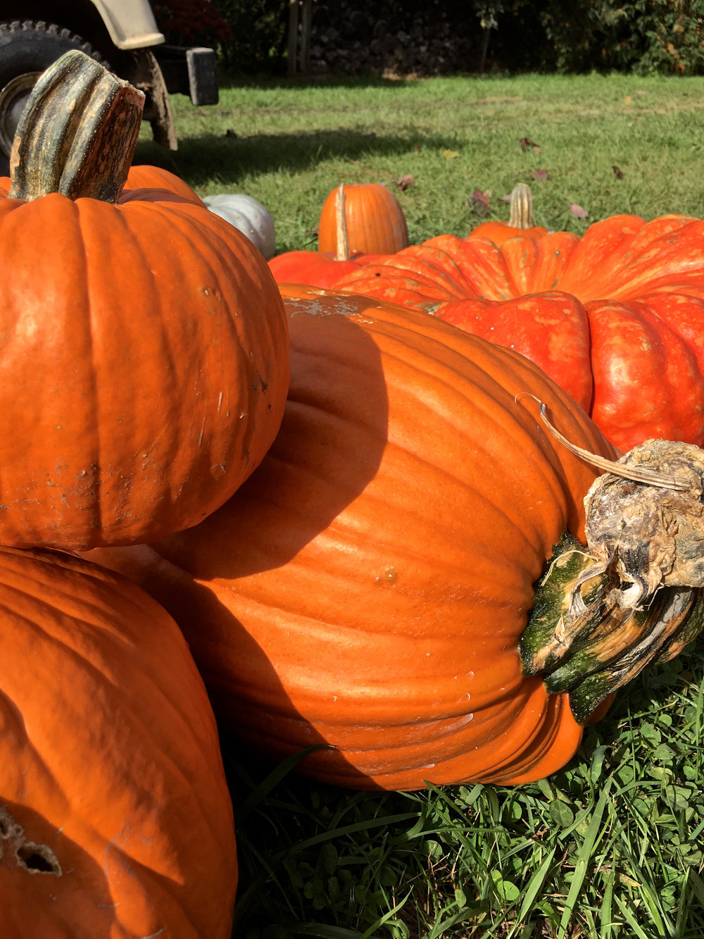 zehorit_pumpkin_carving_fall_spiritedtable_photo3.jpg