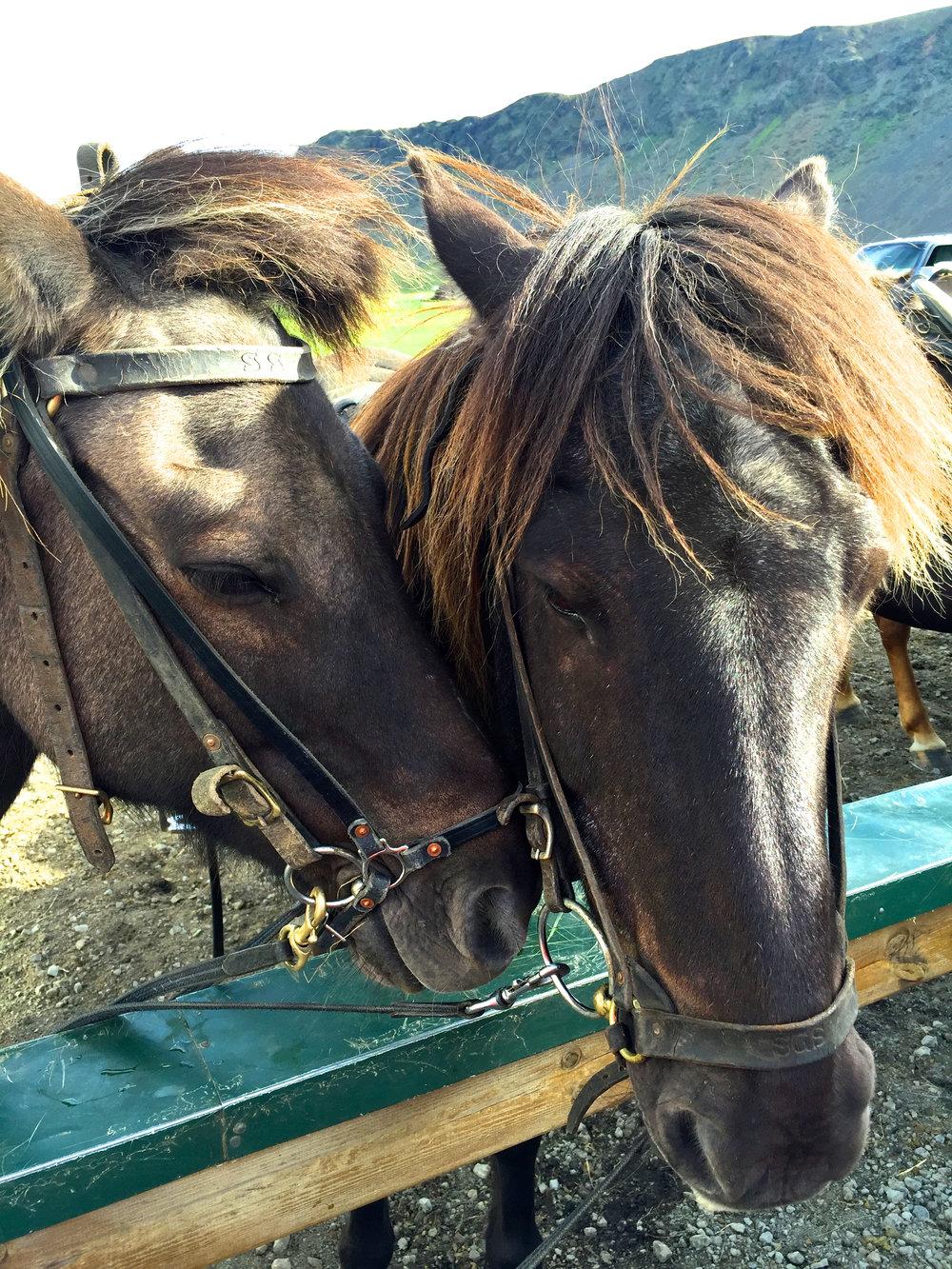 teri_horsebackriding_Iceland_spiritedtable_photo2.jpg