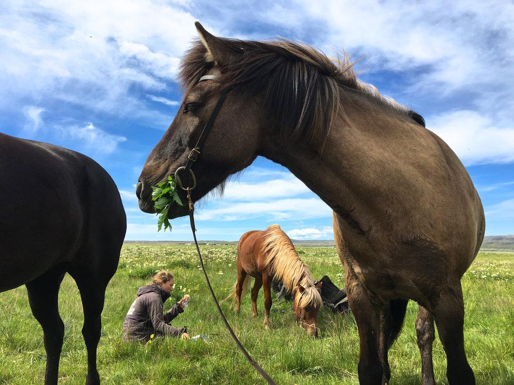 teri_horsebackriding+_Iceland_spiritedtable_photo4.jpg