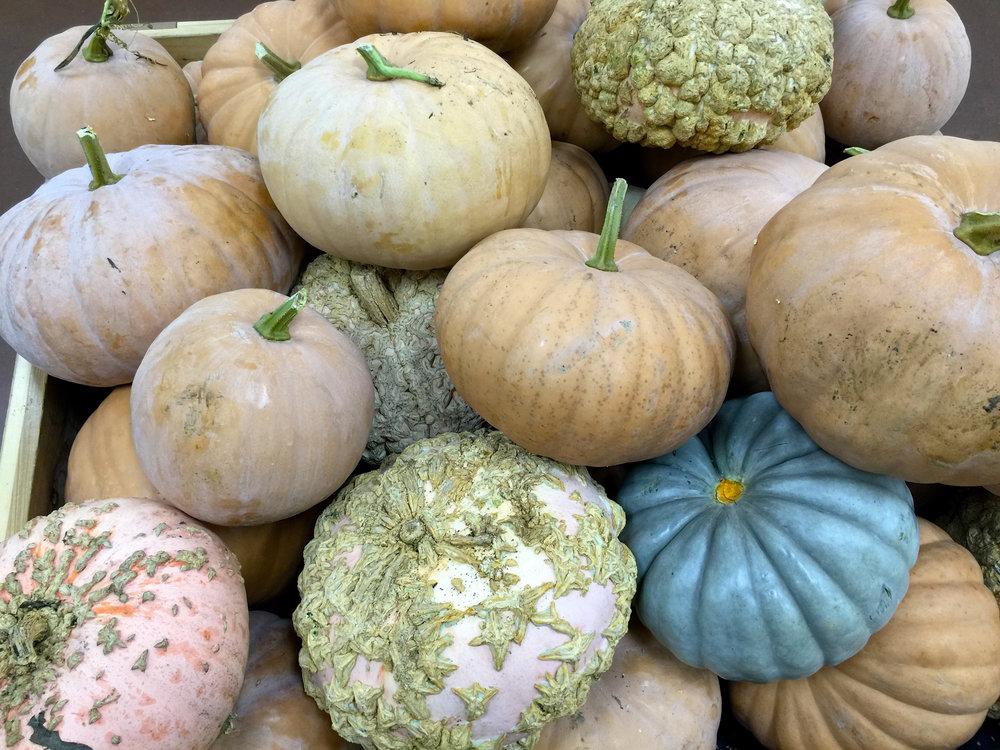 cindi_pumpkins_fall_spiritedtable_photo1.jpg