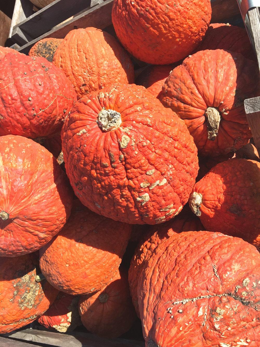 cindi_pumpkins_fall_spiritedtable_photo4.jpg