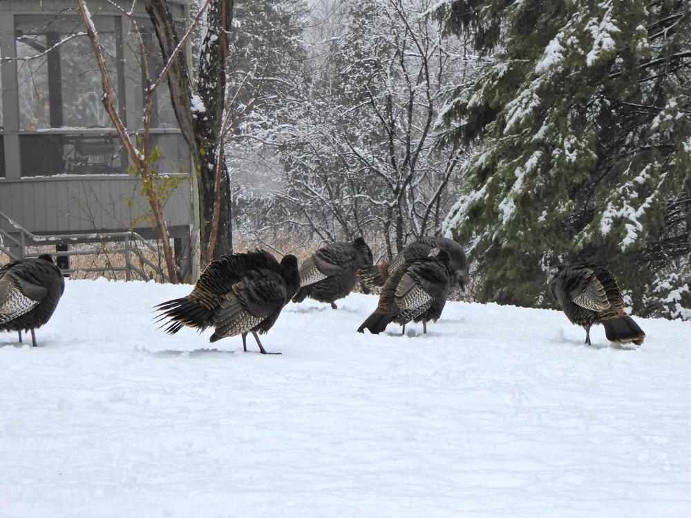 cindi_turkeyswinter_thanksgiving_spiritedtable_photo1.jpg