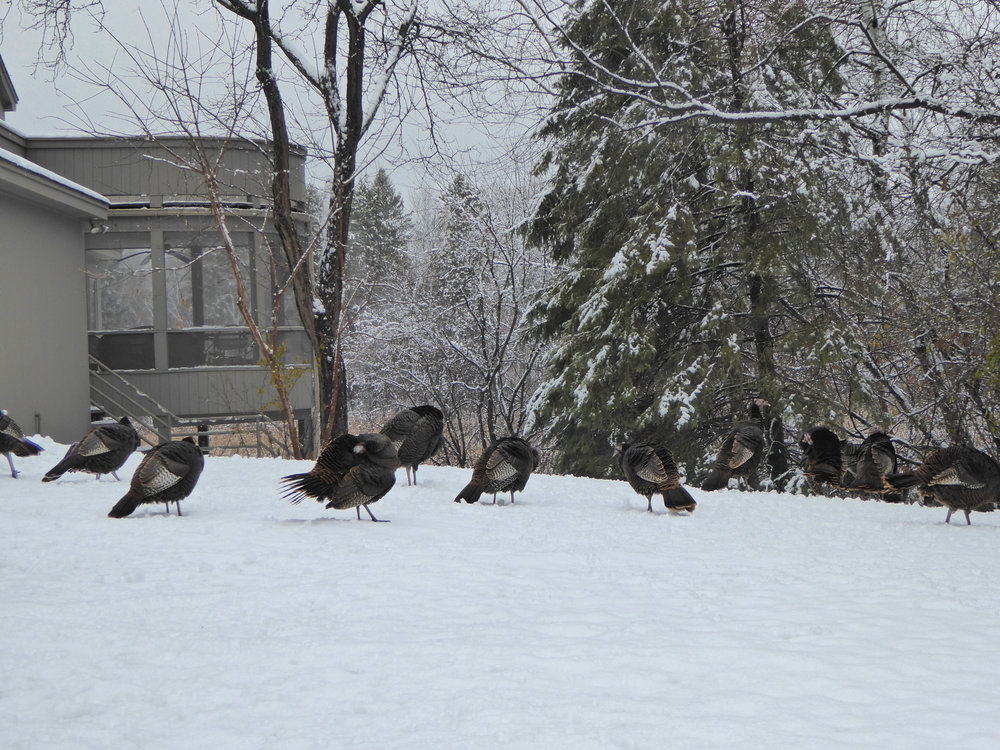cindi_turkeyswinter_thanksgiving_spiritedtable_photo2.jpg