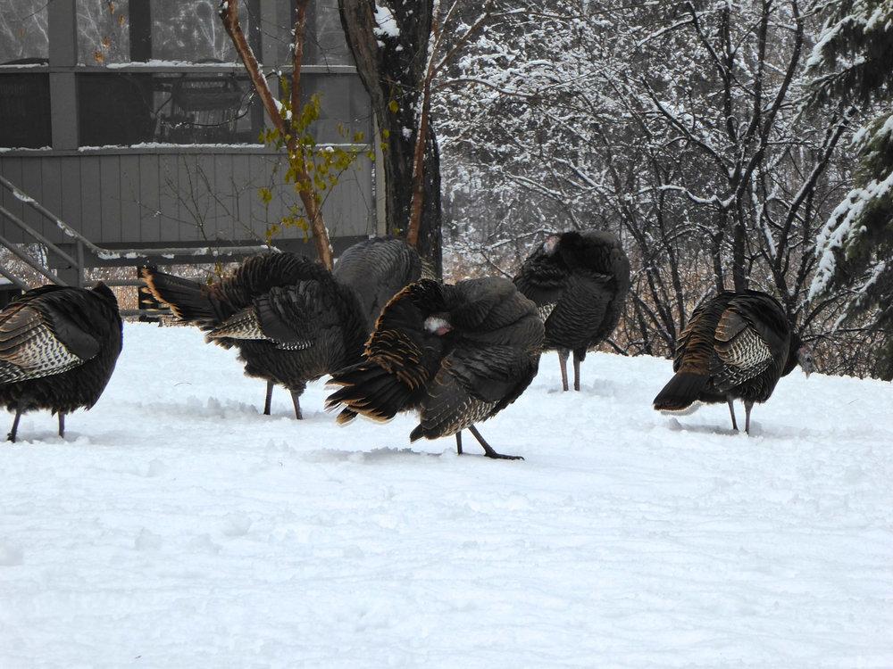 cindi_turkeyswinter_thanksgiving_spiritedtable_photo4.jpg
