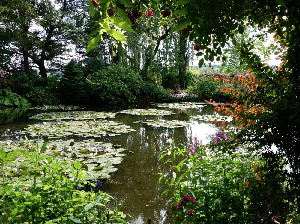 Monet's Water Lily Pond   (photo courtesy of Lisa Michaux)
