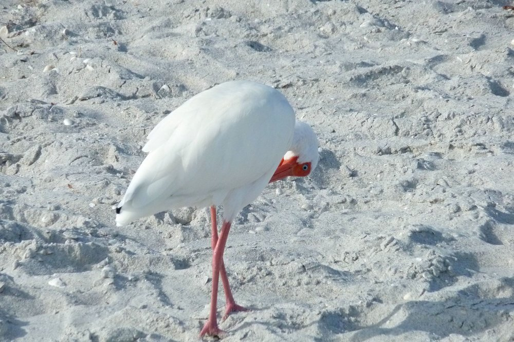 cindi_naples_beach_birds_spiritedtable_photo1.jpg