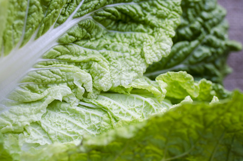 kristine_romaine_lettuce_spiritedable_photo1.jpg