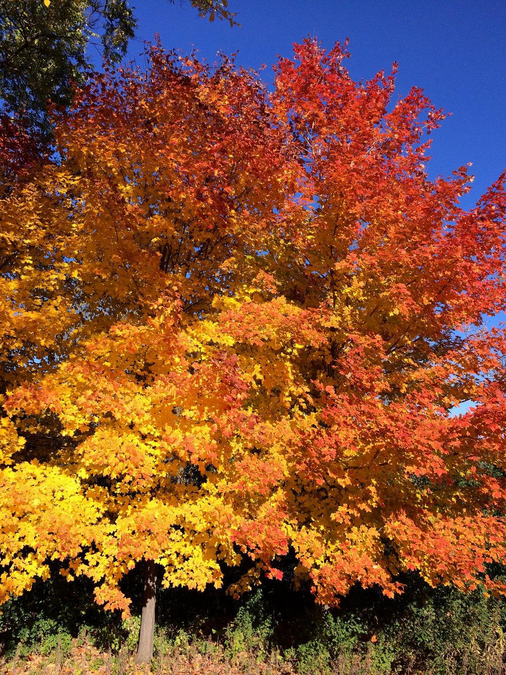 cindi_fall_trees_spiritedtable_photo1.jpg