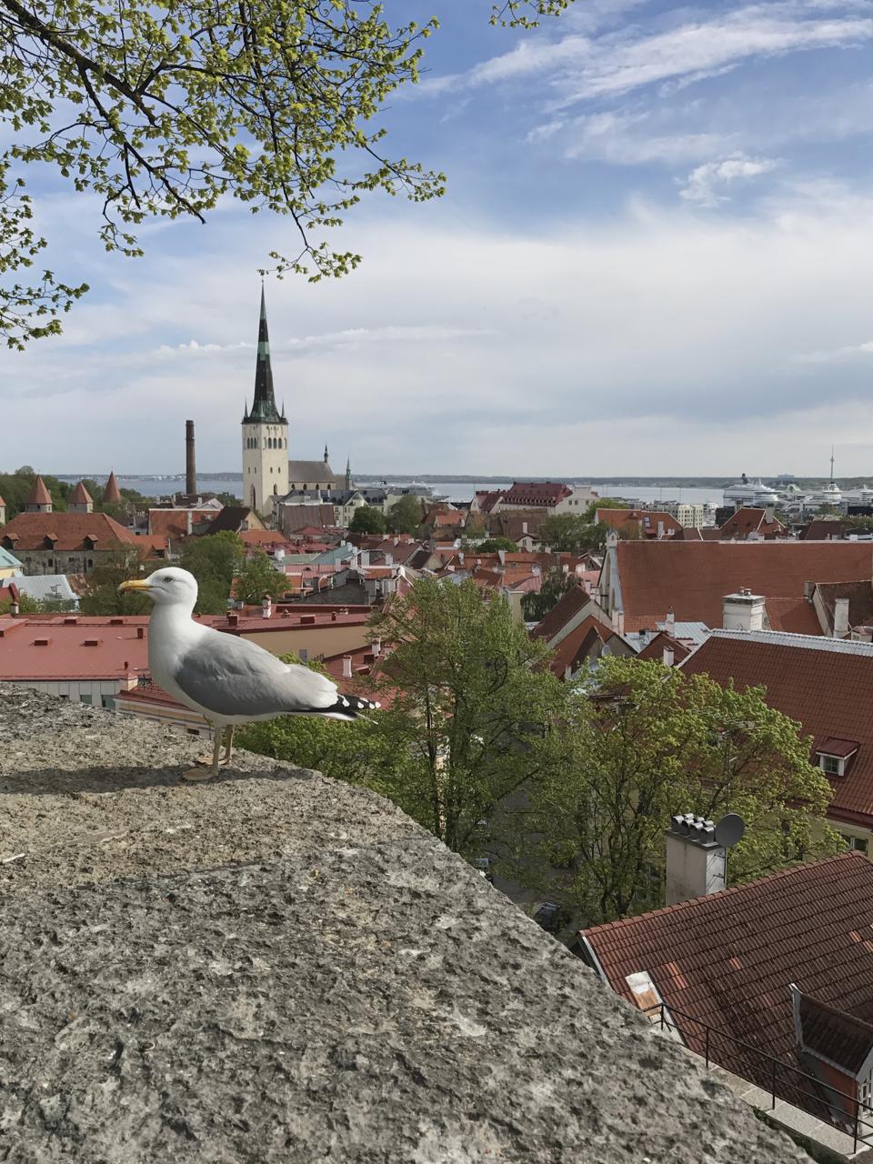 Teri_Tallin_Estonia Baltics_travel_spiritedtable_photot47.jpg