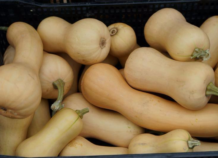 butternut squash copy.jpg