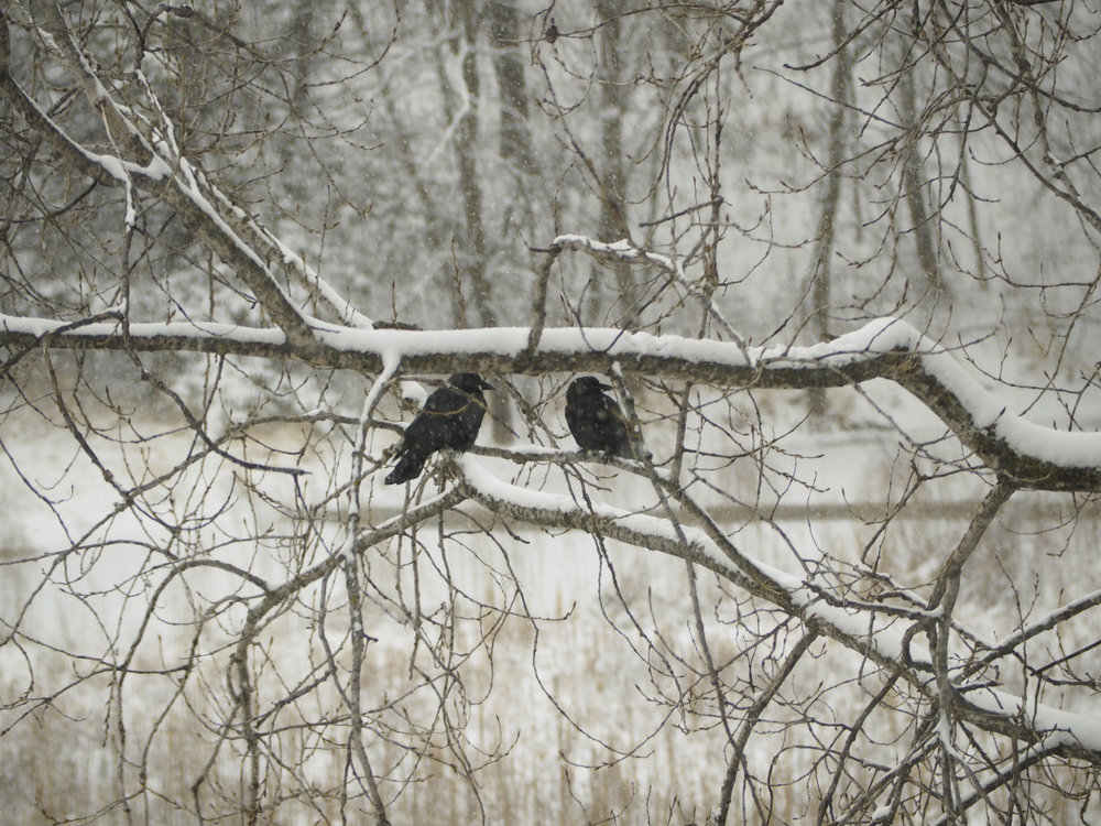 cindi_marsh_crows_spiritedtable_photo1.jpg