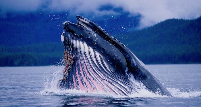 sri_lanka_blue-whale-mirissa.jpg