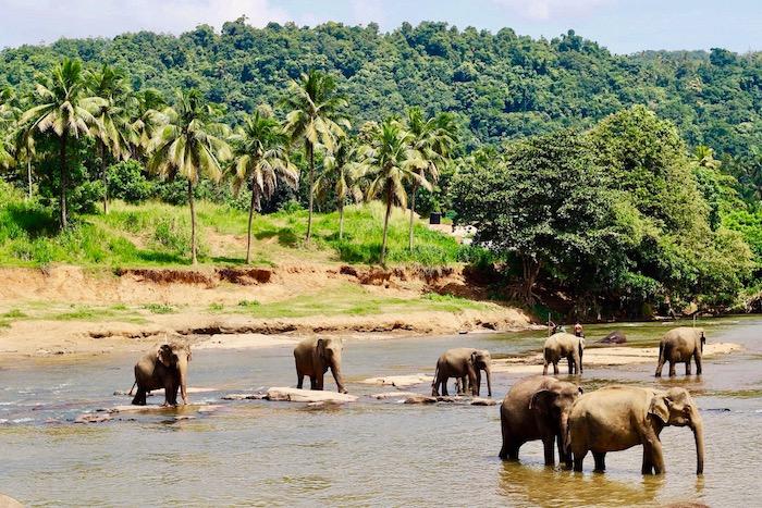 the-elephant-orphanage-sri-lanka.jpg