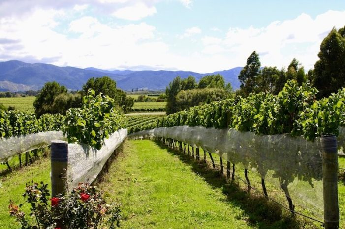 hawkes-bay_new-zealand-wine-guide-701x467.jpg