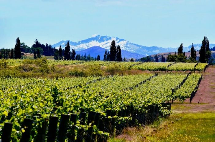 waitaki_new-zealand-wine-guide-701x464.jpg