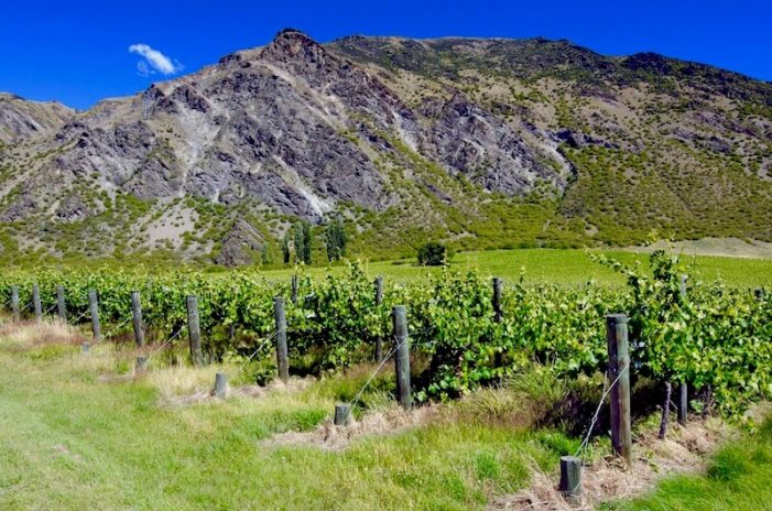 otago_new-zealand-wine-guide-701x464.jpg