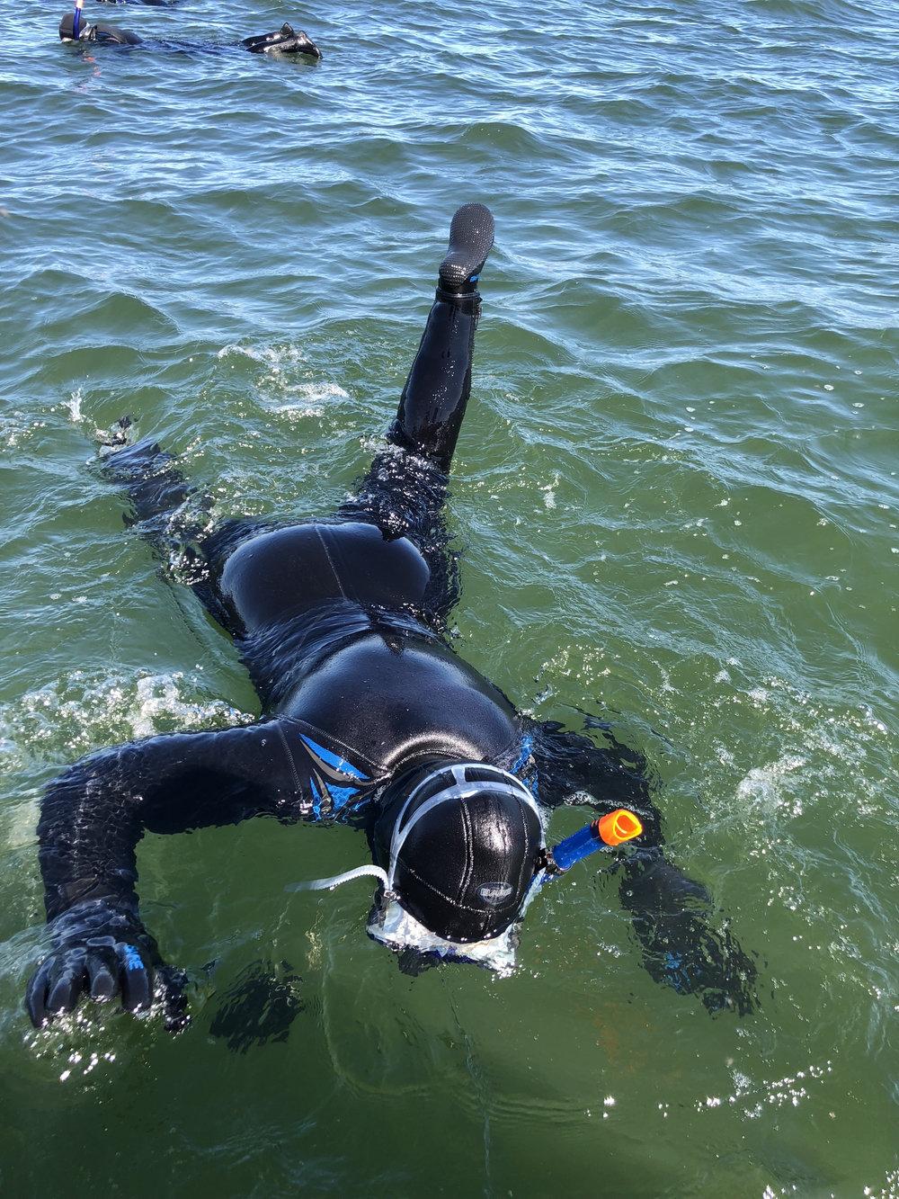 teri_arctic_snorkeling_whales_spiritedtable22.jpg