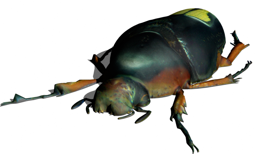 beetle11a.png