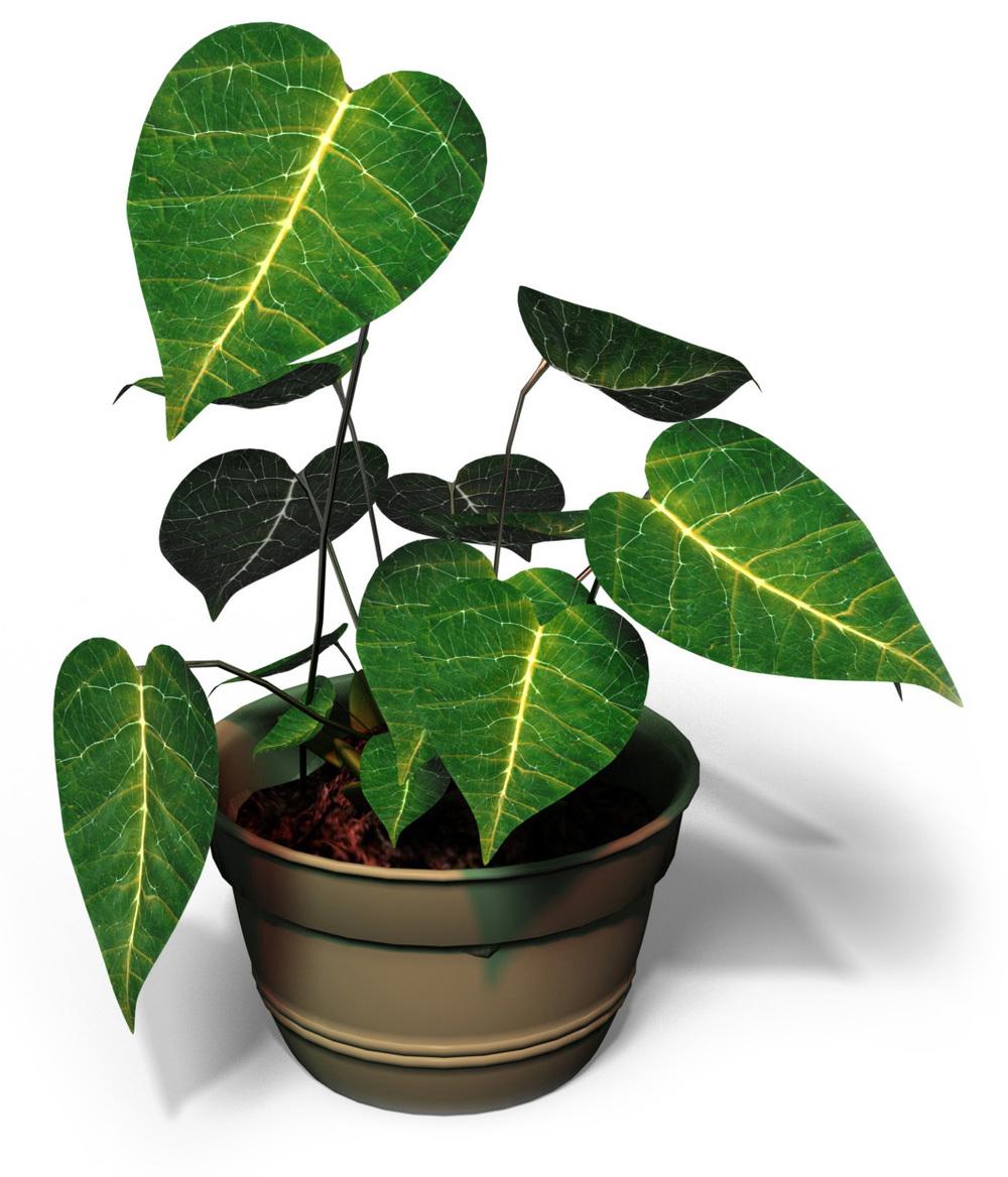 plant19.jpg