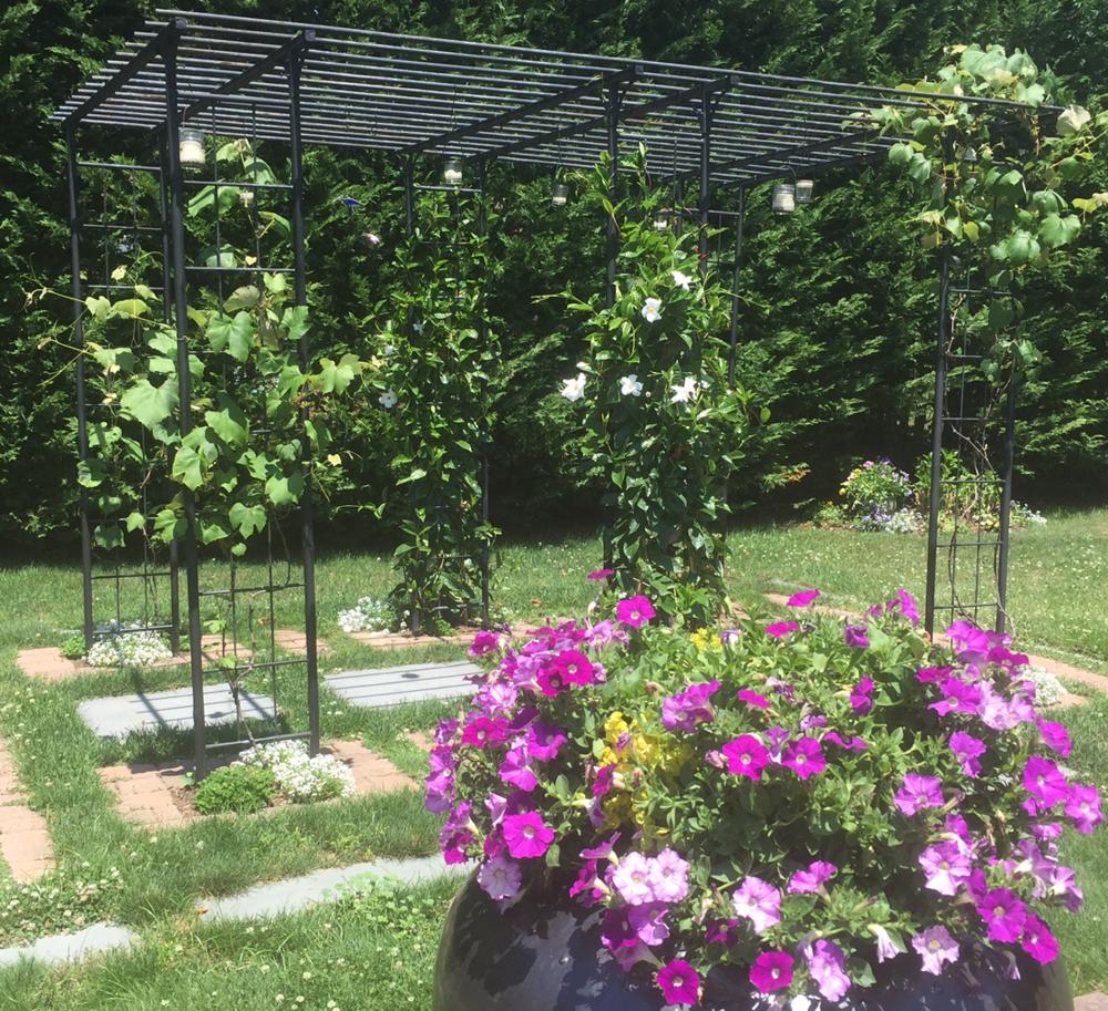 Growin'Grapes