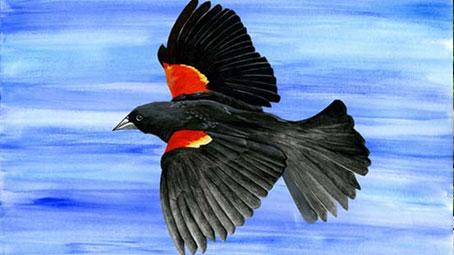 RWBlackbird.jpg