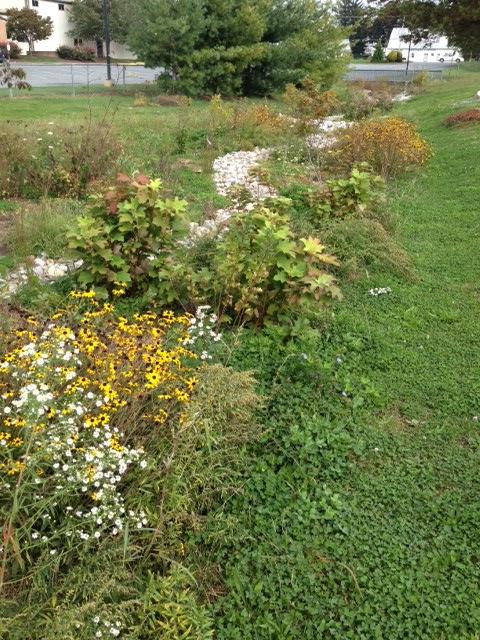 fall 2012 garden.JPG