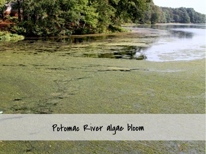 algae 2.png