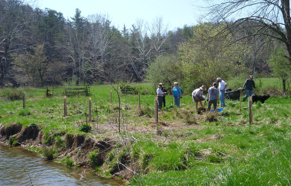 VOLUNTEERS PLANTING TREES and SHRUBS ALONG hOGUE cREEK.