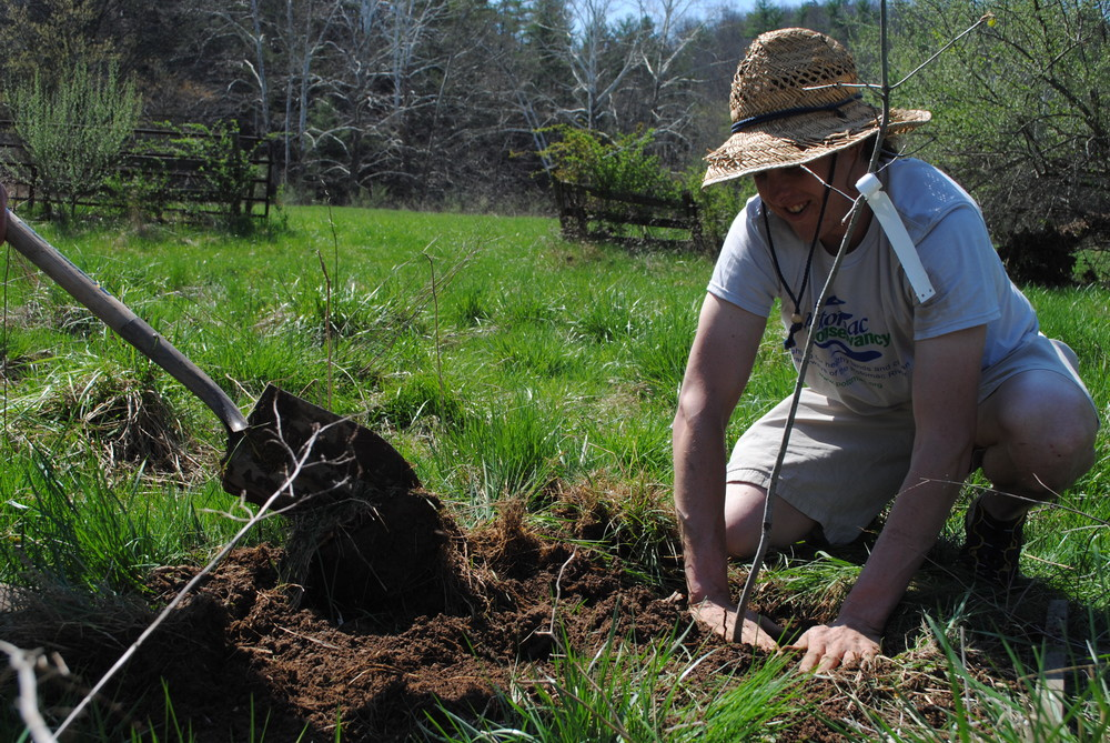 Lauran, a West virginia Landowner and beekeeper, patting down the soil around a newly planted tree.