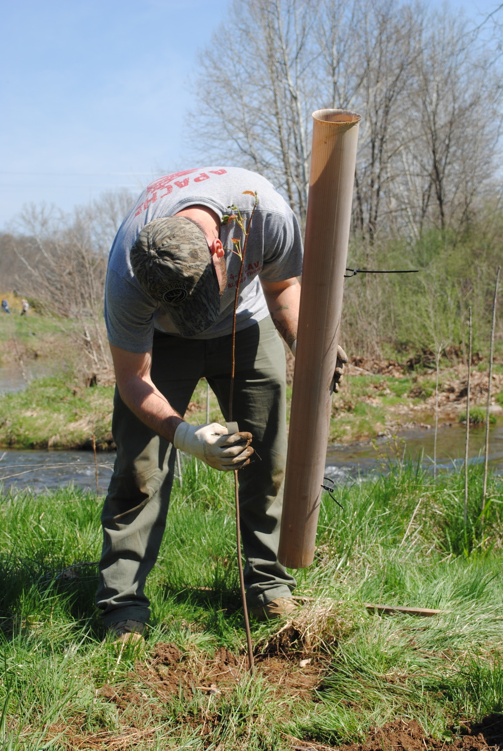 jOE, A RANGER AT cUNNINGHAM fALLS sTATE PARK, securing a tree tube around a newly planted tree.