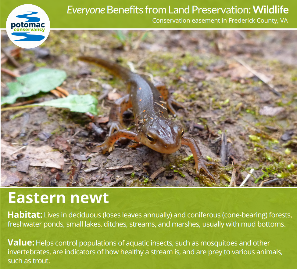 everyone benefits from land preservation potomac conservancy wildlife png