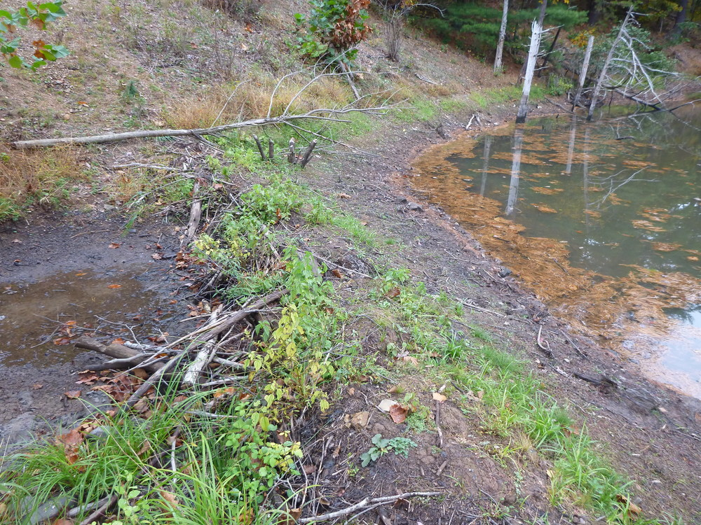 A beaver dam found on a protected property in frederick county, virginia.