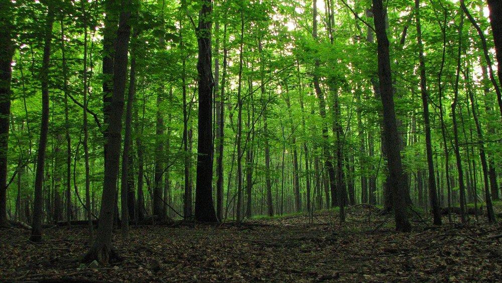 hardwood-forest.jpg