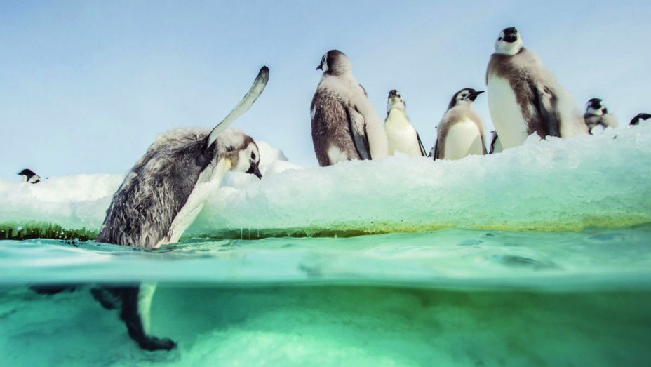 MarchPenguins2-cred-Laurent-Ballesta.jpg