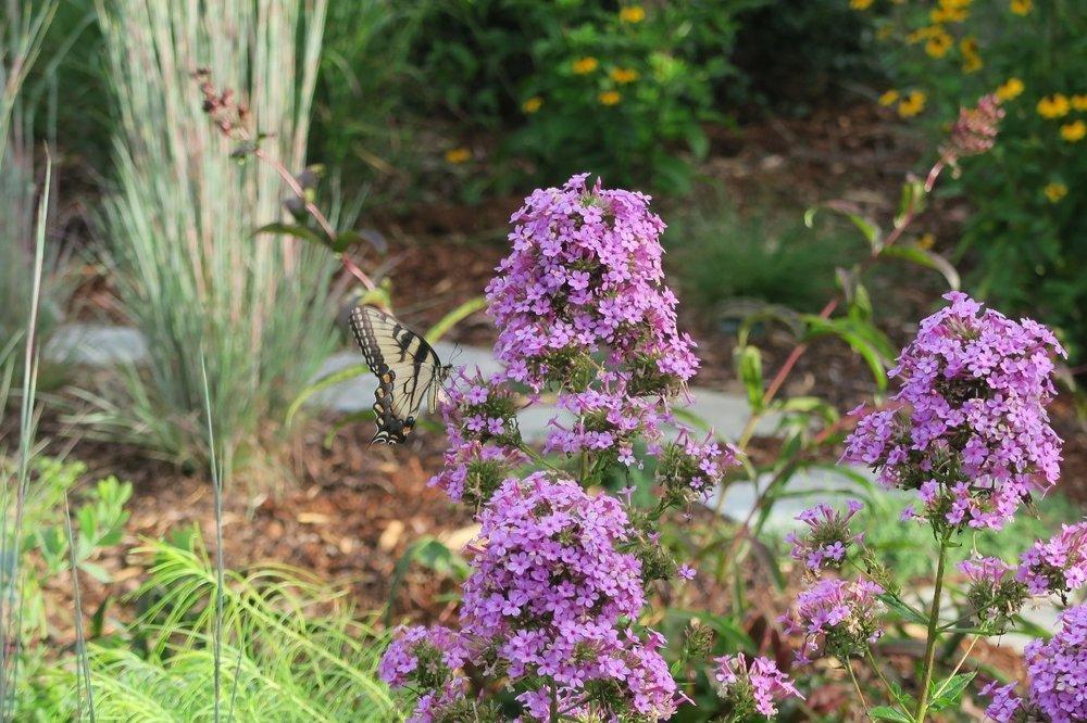 pollinator picture.jpg
