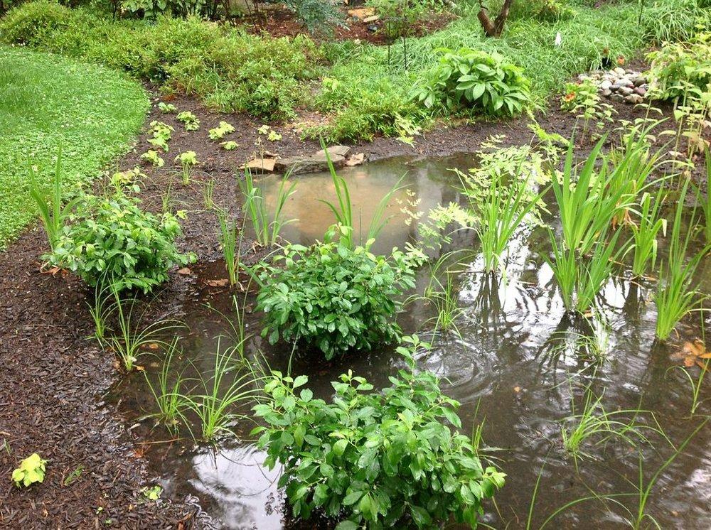rain garden in use.jpg