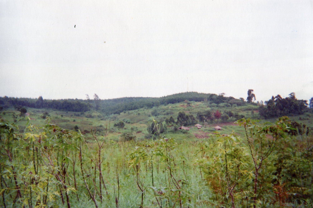 This landscape recalls the entry of armed groups who hid themselves in this forest before attacking the village.