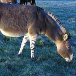 Zonkey-Slideshow_finalRESIZED.jpg