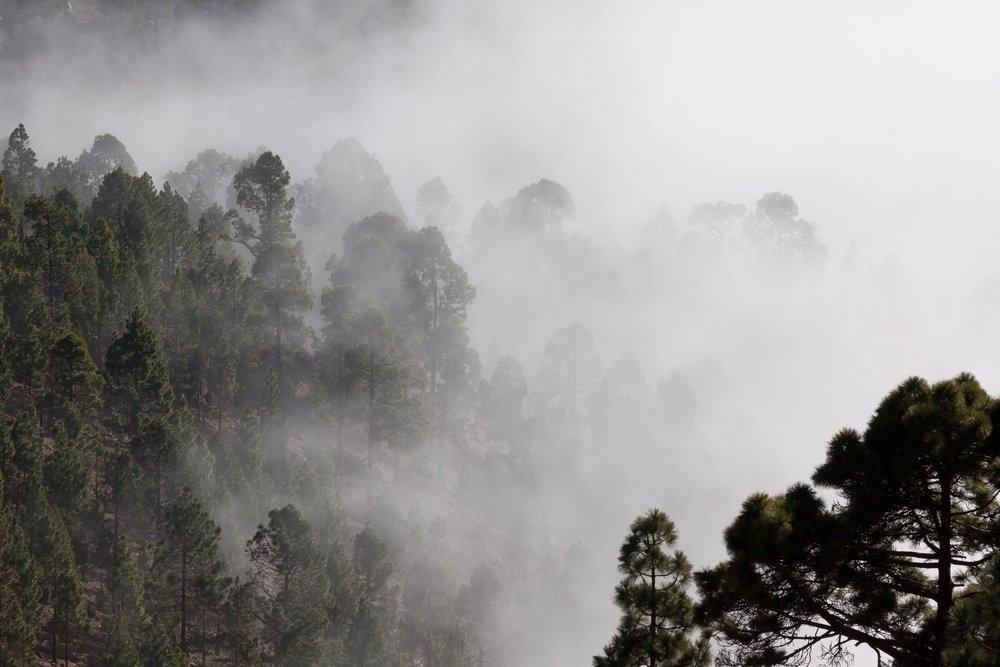 fog-foggy-forest-40726.jpg