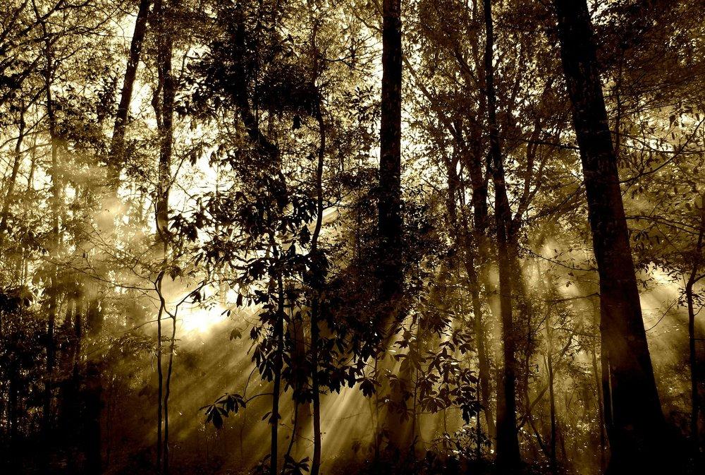forest-67286_1920.jpg