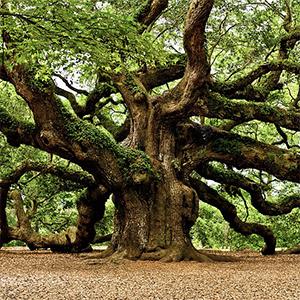 Catalyst §23  The Oak (Tree 1)