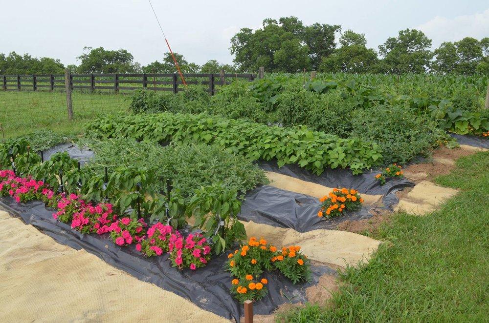 GracePoint Community Garden.