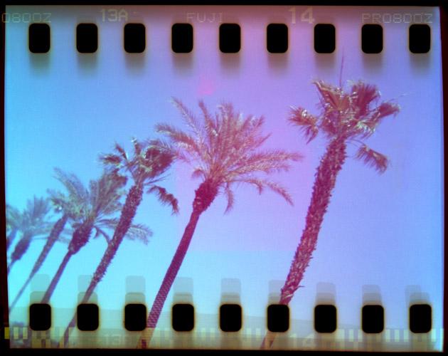 toddmduym_coachella_palmtrees