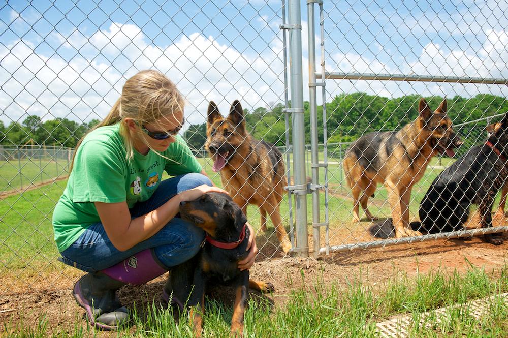Daycare � Ashley Hills Pet Center
