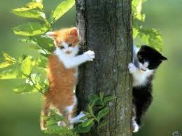 kittensintree.jpg